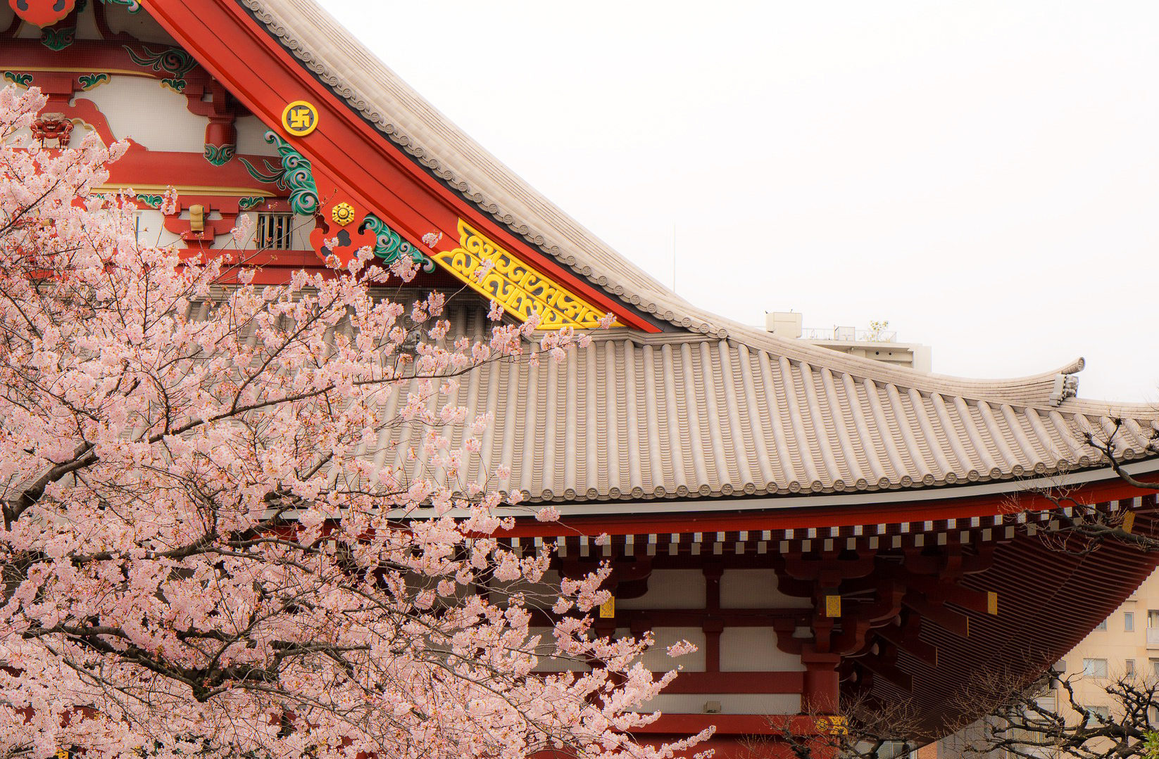 Золотое кольцо Японии + цветение сакуры